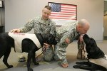 Pentagon Realizes Therapy Dogs Work