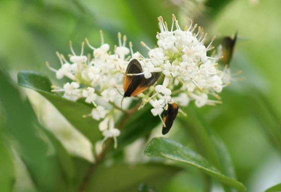 moths on a flower