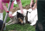 Suffolk Virginia Fire Rescue Save Dog Trapped for 2 Days