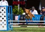 Incredible Dog Challenge at Purina Farms