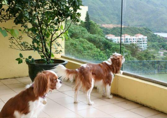 Is Hong Kong Dog Friendly - Discovery Bay