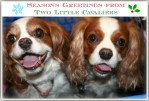 Season's Greetings From Two Little Cavaliers!
