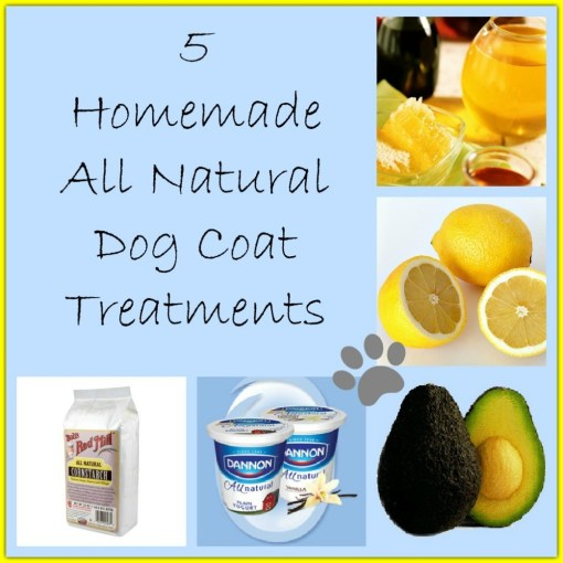 5 Homemade Dog Coat Treatments - https://twolittlecavaliers.com