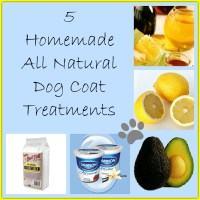 5 Homemade Dog Coat Treatments