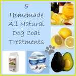 5 Homemade Dog Coat Treatments - https://twolittlecavaliers.com
