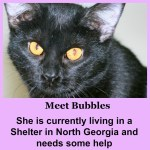 Can You Help this Little Cat? - Bubbles