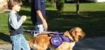 National Service Dogs For Autism / Pet Bloggers Blog Hop