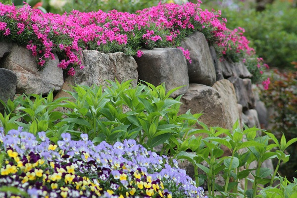 I wish this way my spring garden