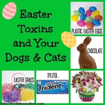 easter toxins and your dogs and cats