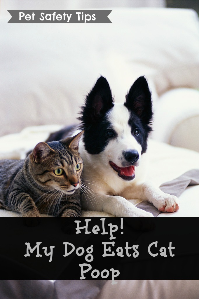 Stop Dogs From Eating Cat Feces