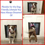 Plexidor for the Dog friendly Lifestyle you have always dreamed ofPicMonkey Collage