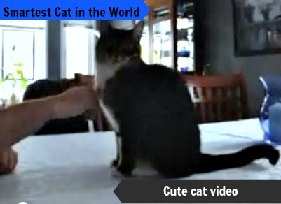 smartest cat in the world