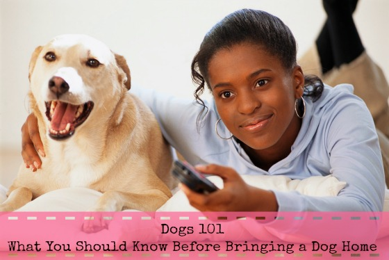 Dogs 101 What You Should Know Before Bringing a Dog Home