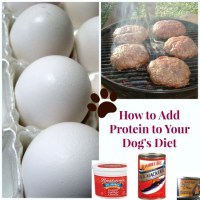 5 Ways to Add Protein to Your Dog's Diet