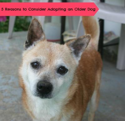 5 Reasons to Adopt an Older Dog