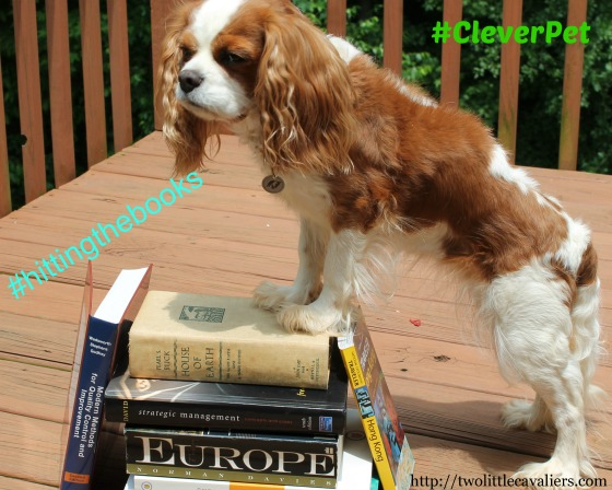 Indiana the Cavalier King Charles Spaniel Hitting the Books #cleverpet