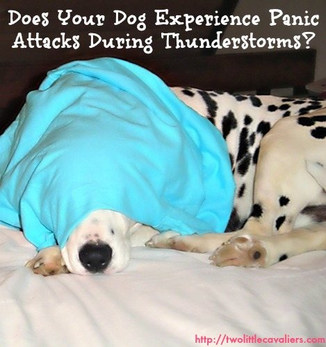 Travelling With Panic Disorder: Does Your Dog Experience Panic Attacks When It Storms