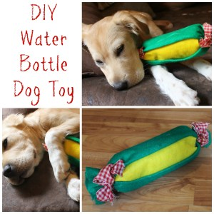 DIY Water Bottle Dog Toy