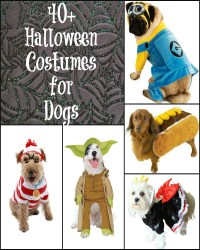 40 Halloween Costumes for Dogs