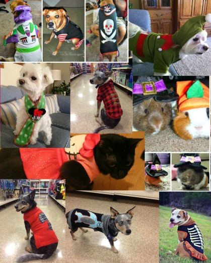Friends of Two Little Cavaliers dressed in their PetSmart Fashions