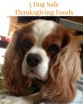 5 Dog Safe Thanksgiving Foods