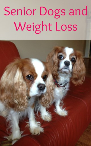 Senior Dogs and Weight Loss