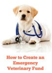 How to Create an Emergency Vet Fund