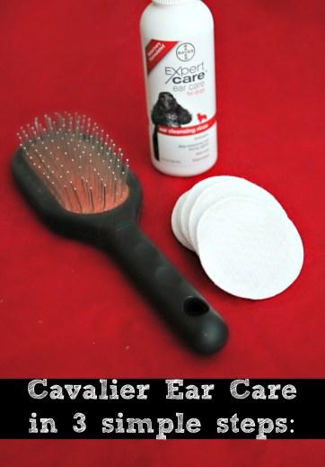 Cavalier Ear Care in 3 Simple Steps #BayerExpertCare