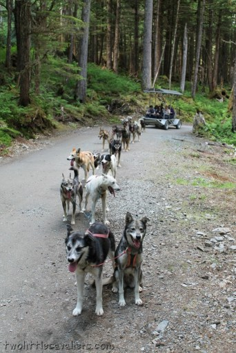 How Dogs Helped Save An Alaska Town
