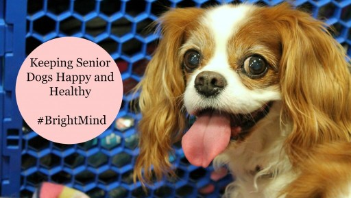 Keeping Senior Dogs Happy and Healty #BrightMind