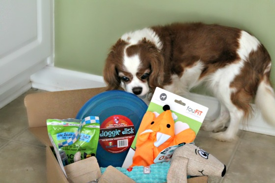 Subscription Boxes for Dogs and Cats