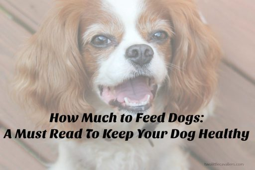 How Much to Feed Dogs - A Must Read To Keep Your Dog Healthy