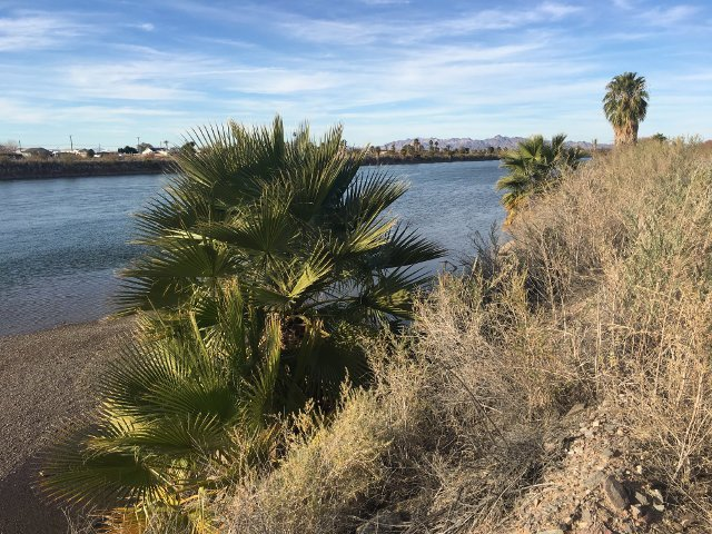 Campsite Review: Colorado River BLM Area in Ehrenberg, Arizona