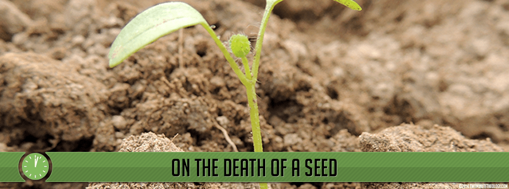 On the Death of a Seed