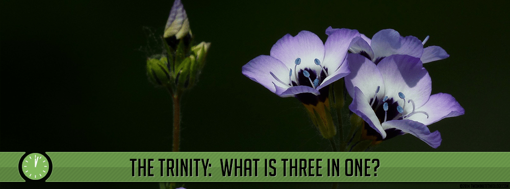 The Trinity: What is Three in One? Part Two