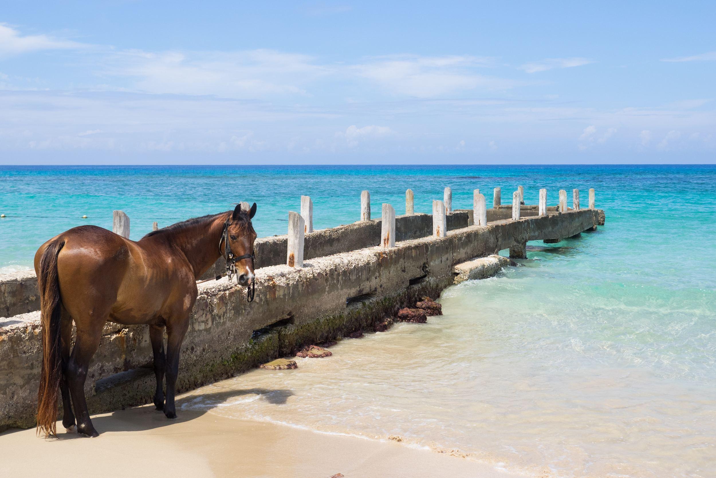 Best Beaches in Jamaica Top 10 Beaches in Jamaica