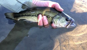 Large Mouth Bass Catch and Release