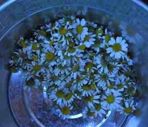 herb gardening farmstead homesteading