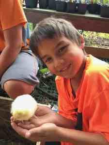 raising chickens, two oaks farmstead