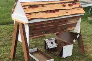 Honey Bees; How to Install a Nuc into a Top Bar Hive – EASY