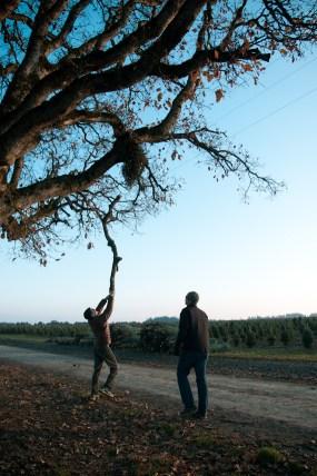 wpid17601-Cutting-Christmas-Trees-on-the-Family-Farm-5.jpg
