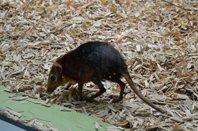 steppeslurfhondje De Zoo van Antwerpen - by day deze keer