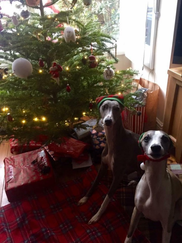 whippet Christmas gifts