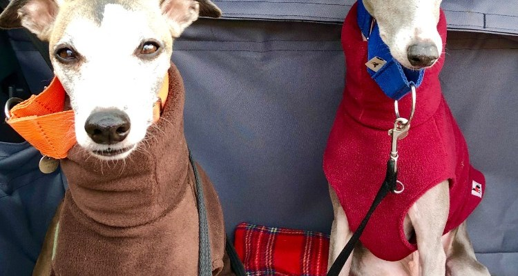 A Whippet Jumper for Cold Days- The Redhound Fleece