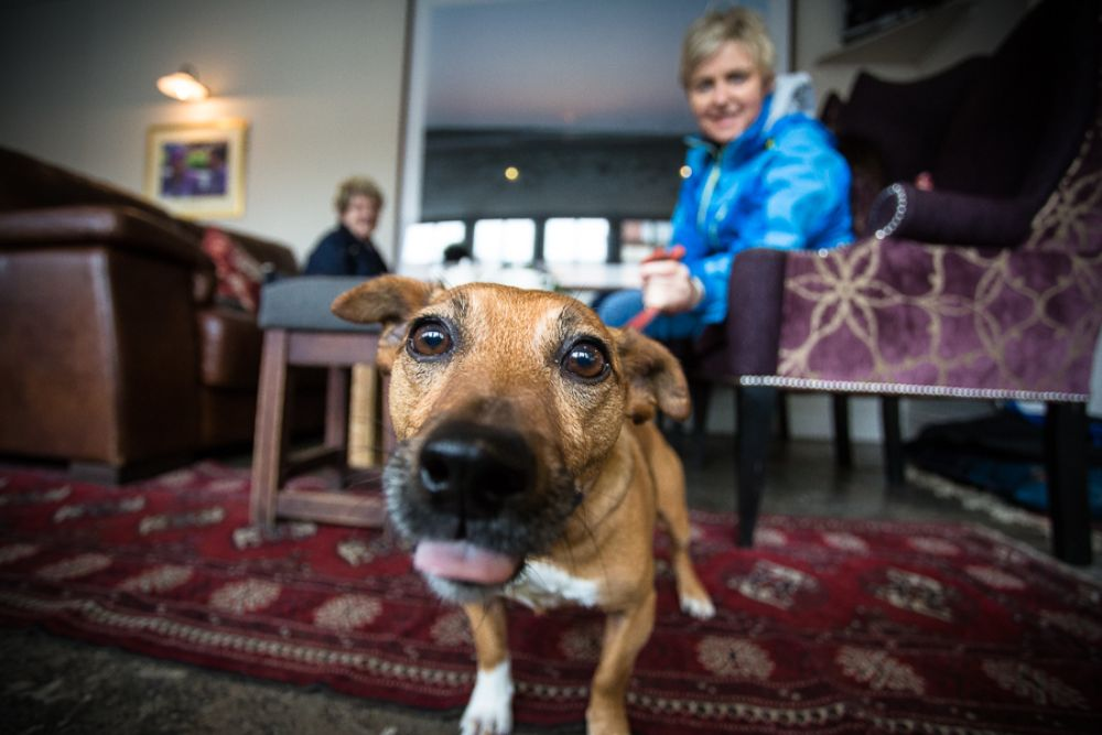 7 Quality Dog Friendly Hotels in Norfolk
