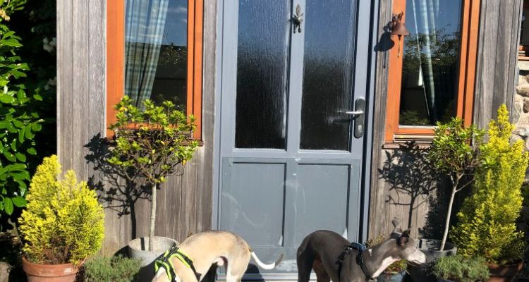 Luxury dog friendly cottages: Culhawk House, Angus Glens
