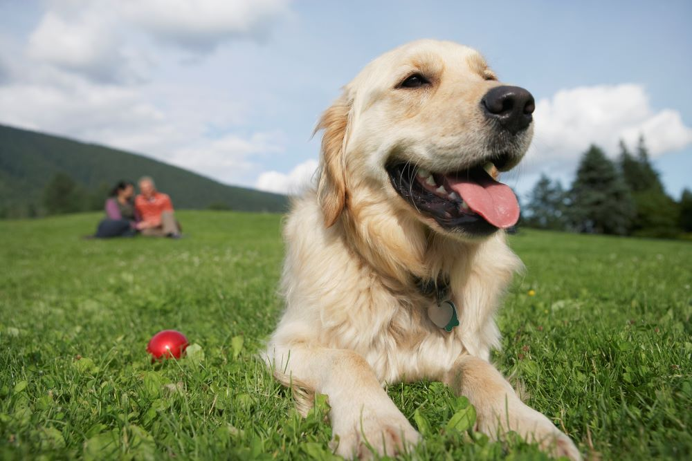 Arthritis in dogs- how to help