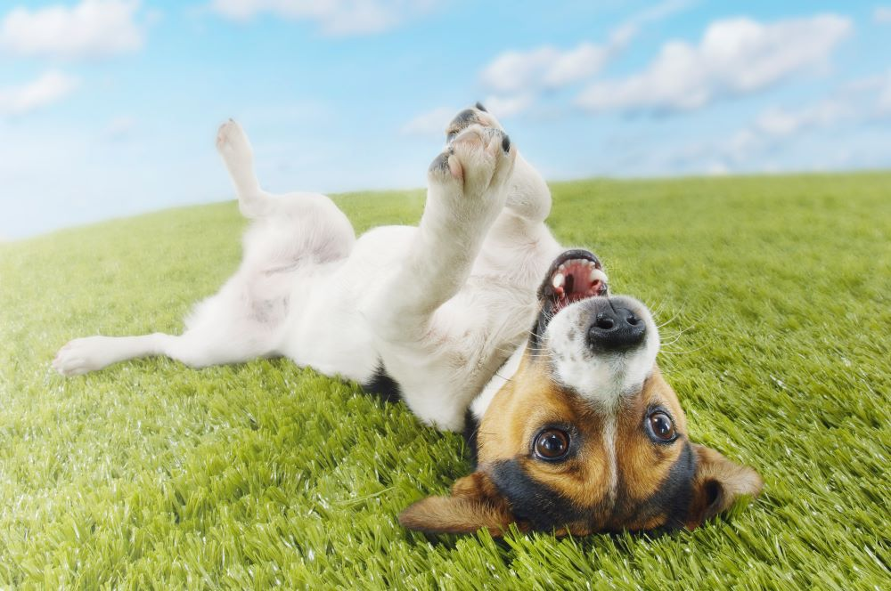 5 Tips for a Happy Dog