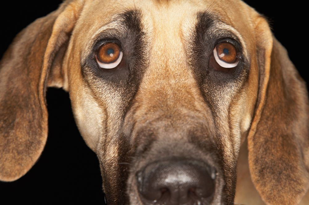 How to Calm a Dog with Anxiety