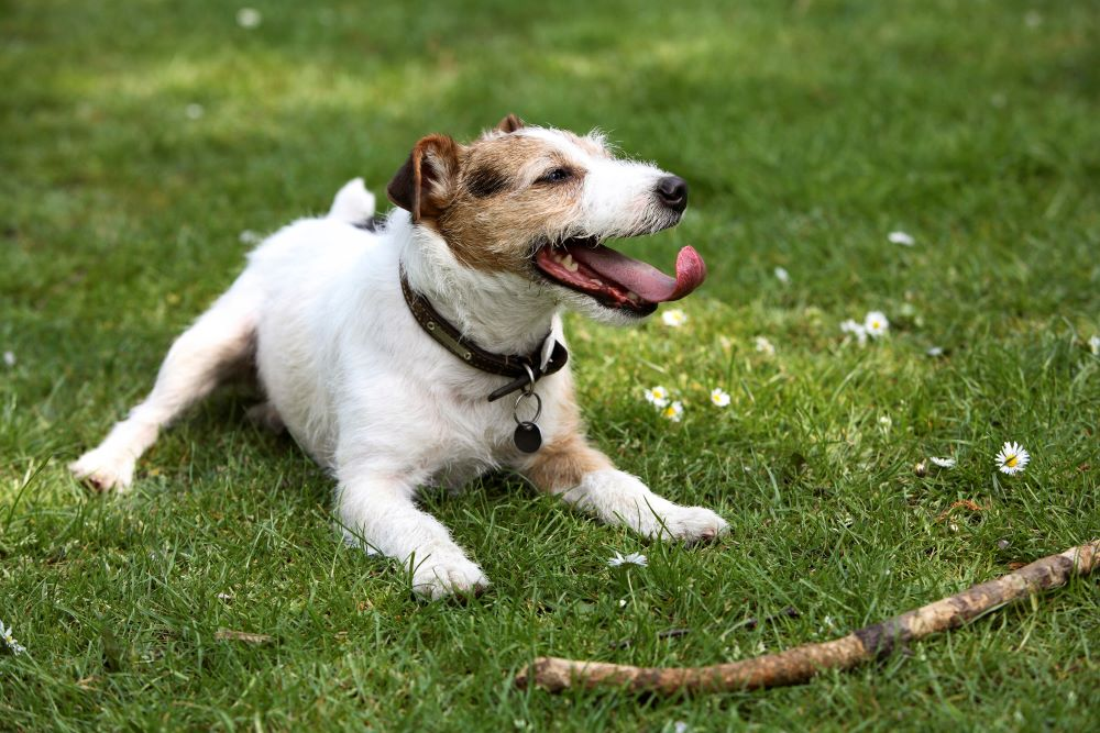 Keeping Your Dog Happy When Returning to Work-Dog & Puppy Separation Anxiety